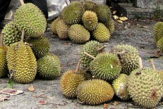 http://www.3semaines.info/cache/widgetkit/gallery/151/2-Perhentian-durian-8b977a16ed.jpg