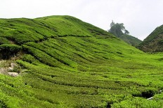 1-Cameron-Highlands-plantation-the
