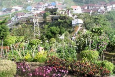 3-Cameron-Highlands-roseraie